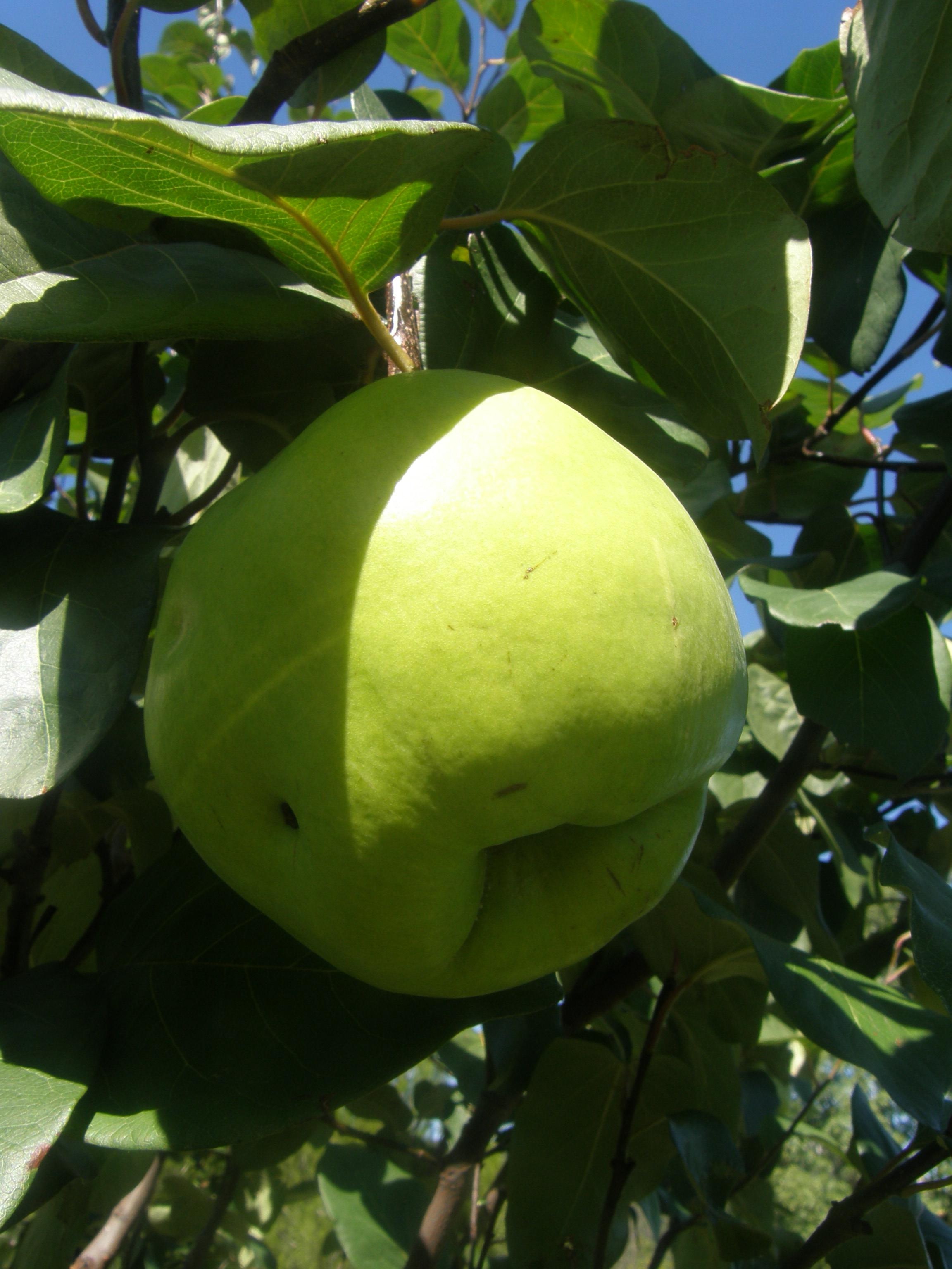 Composteur Bois Botanic : La ronde des fruitiers – Conseils jardin – Daniel LysConseils jardin